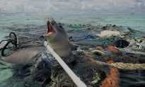 Plastic Kills: Here Is Why (+Video)