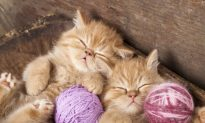 International Hug Your Cat Day: What Cats Can Teach Us About Parenting