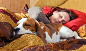 Are Your Pets Disturbing Your Sleep? You're Not Alone, Mayo Clinic Study Finds