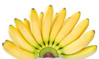 GMO Advocates Ignore Failure of Golden Rice, Quietly Move On to GM Bananas