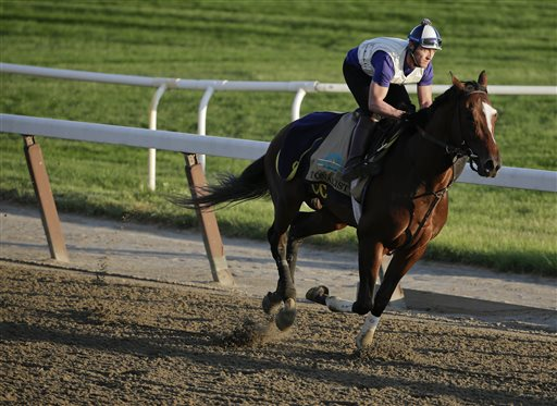 Tonalist gallops around the track during a workout at Belmont Park, Friday, June 6, 2014, in Elmont, N.Y. Tonalist will be one of ten challengers looking to spoil California Chrome's bid at a Triple Crown when they race in the 146th running of the Belmont Stakes horse race on Saturday.(AP Photo/Julie Jacobson)