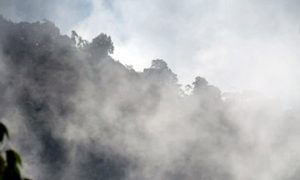 Mountain Forests Store More Carbon Than Expected