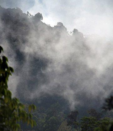 Cloud forest in Indonesia New Guinea. (Photo by: Rhett A. Butler/news.mongabay.com)