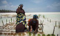 Top Watersports Opportunities in Zanzibar
