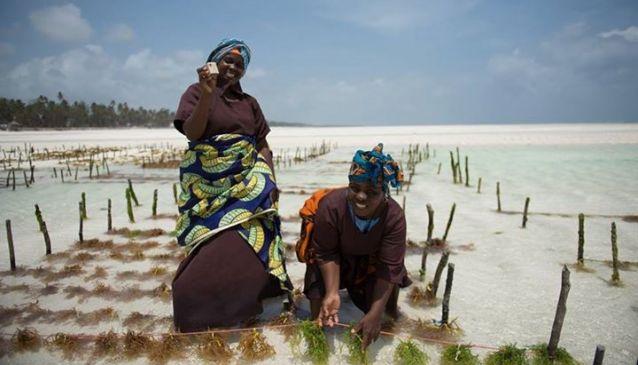 Transforming the lives of local Zanzibari women through seaweed harvesting (MyDestination.com)