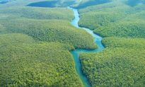 Mysterious Man-Made Ditches Predate Amazon Rainforest