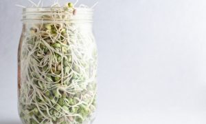 5 Reasons for Sprouting at Home