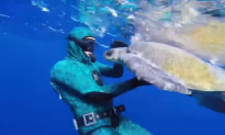 Diver Saves Sea Turtle, Then THIS Happens (Video)