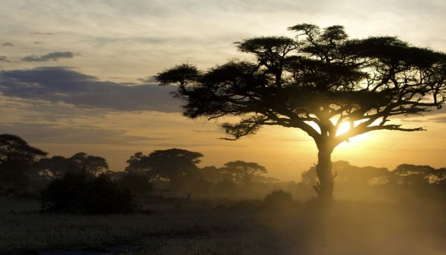 Kenya (MyDestination.com)