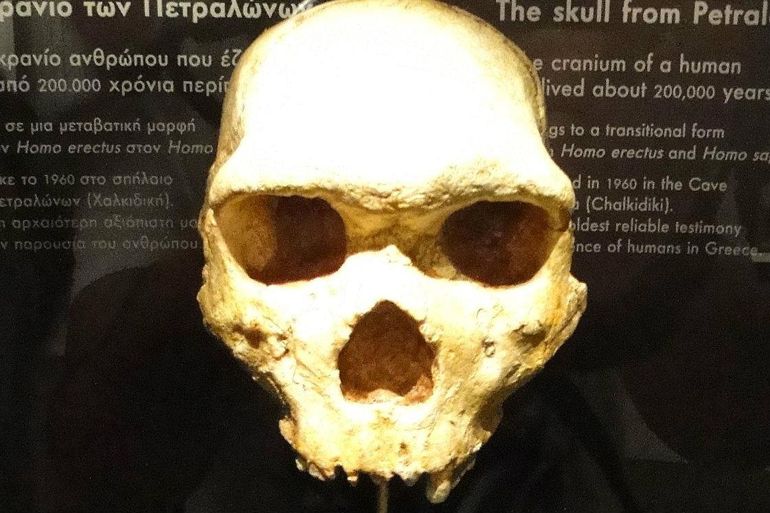 Petralona Skull