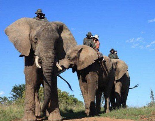 Addo Elephant Back Safari (A Luxury Travel Blog)