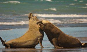 Argentina Gains Biosphere Reserve on Peninsula