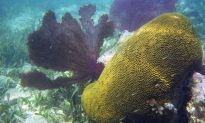 Coral Reefs Key for Saving Millions of Humans