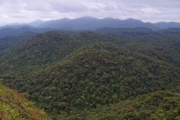 With only 3.5 percent intact vegetation left in the Atlantic Forest, it is the world's most imperiled biodiversity hotspot. This is an image of intact forest in Intervales State Park. Photo by: Bjørn Christian Tørrissen/Creative Commons 3.0.