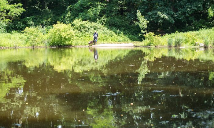 Strack Pond in Forest Park, Queens, June 30, 2014.  In recent years, city agencies have exponentially increased its spraying of Roundup, a weed-killer with a primary ingredient that is likely linked to cancer.  (Laura Cooksey/Epoch Times)