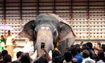 India's Celebrity Elephants Do Not Enjoy Celebrity Comfort