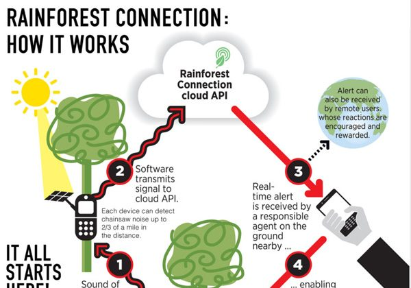 The RFCx system. (Courtesy of Rainforest Connection)