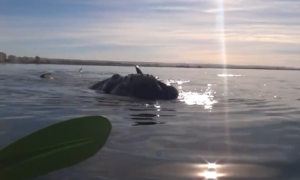 Massive Whale Lifts Kayakers Onto Its Back (Video)