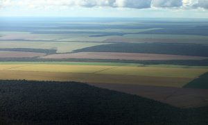Deforestation Possibly Stopped by 2040 in Brazil