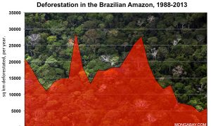 Targeted Enforcement Works for Amazon Conservation