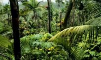 Adventure Experience in Puerto Rico Rainforest (Video)