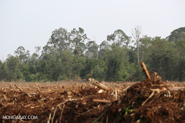 Plantation development in Riau, Sumatra. Photos by Rhett A. Butler.