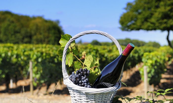 A bottle of Burgundy is shown in a vinyard in Burgundy, France. (ventdusud/iStock/Thinkstock)