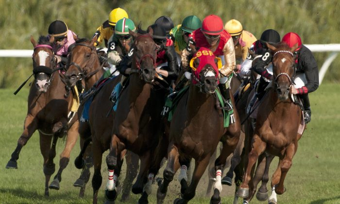 This photo released by Michael Burns shows jockey Eurico Da Silva guiding Up With the Birds (front, gold and red silks) to victory in the $500,000 dollar Breeder's Stakes over the E.P.Taylor Turf Course at Woodbine Race Track Toronto on Sunday Aug. 18, 2013. (AP Photo/The Canadian Press, Michael Burns)