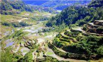 Stunning Scenery of Rice Terraces in Banaue, the Philippines