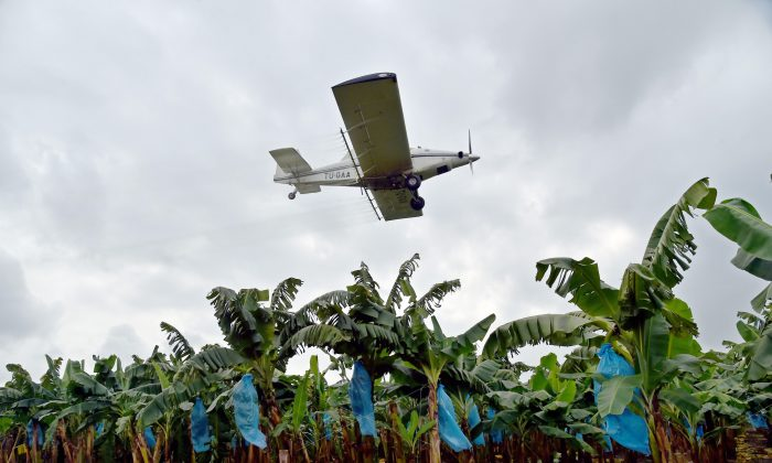 A plane sprays pesticides on a banana plantation west of Abidjan, Ivory Coast, on July 15, 2014. (Issouf Sanogo/AFP/Getty Images)
