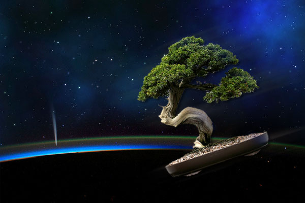 Bonsai in Space (Credit: Leafloor), Adapted Creative Commons, (Background - Flickr, Webtreats, NASA's Earth Observatory), (Bonsai - Flickr, Cliff)