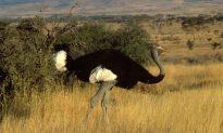 New Bird Species Added to Endangered List