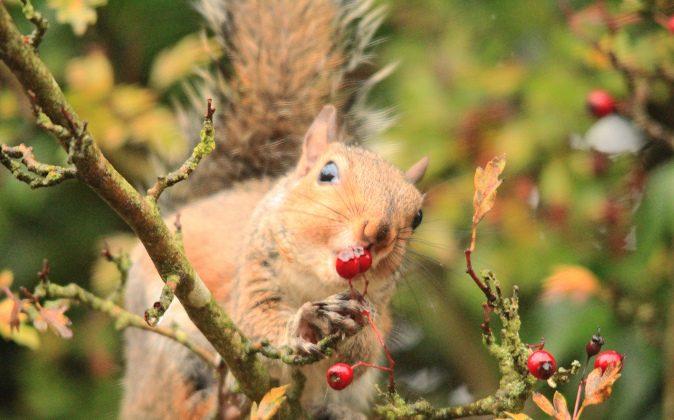 Berry bizarre. (Milo Bostock/Flickr, CC BY)