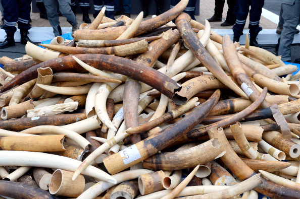 Three tonnes of illegal ivory are displayed on February 6, 2014 in front of the Eiffel tower in Paris. France fired the latest volley in the world's uphill battle against African elephant poaching, crushing three tonnes of illegal ivory at the foot of the Eiffel Tower and urging others to follow suit. (Bertrand Guay/AFP/Getty Images)