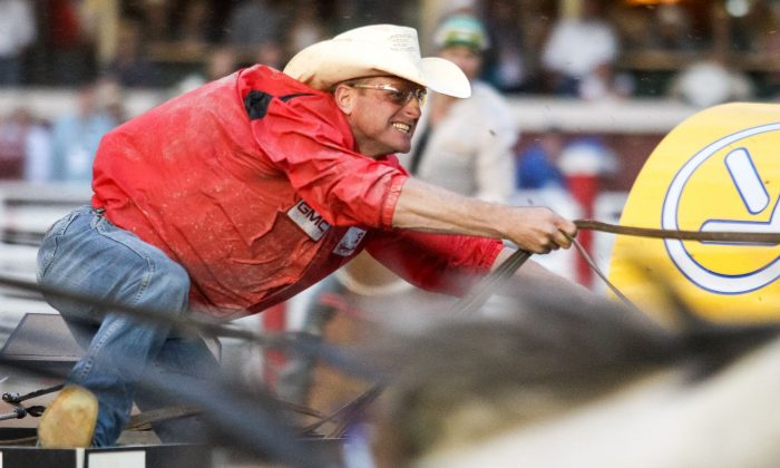 Chuckwagon driver Jason Glass races to the finish in the Calgary Stampede on July 12, 2013. He was the aggregate and $100,000 GMC Rangeland Derby champion in the 2013 Stampede. (Mike Ridewood/Courtesy Calgary Stampede)