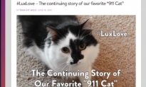 Crazed Cat Forces Couple to Lock Themselves in Room (Video)