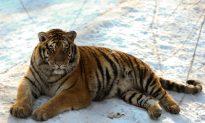 Illegal Deforestation Problem in Siberia