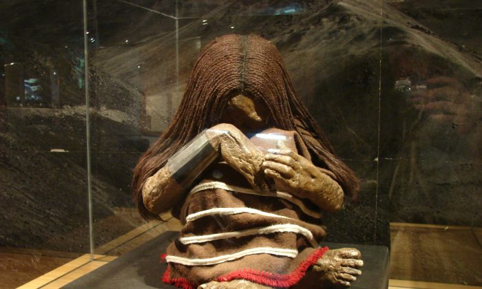 A replica of a mummy of a young Incan boy on display at the National Museum of Natural History in Santiago, Chile. (Jason Quinn via Wikimedia Commons)