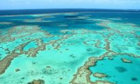 Coral Reefs & Luxury Resorts in the Whitsundays