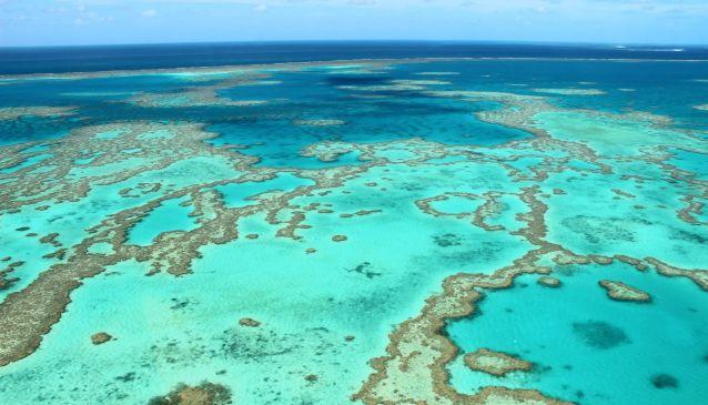 Coral Reef (MyDestination.com)
