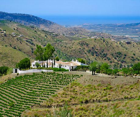Cortijo (A Luxury Travel Blog)