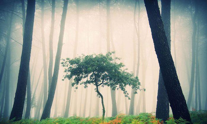 """""""Mystic Forest"""" (Guillermo Carballa)"""