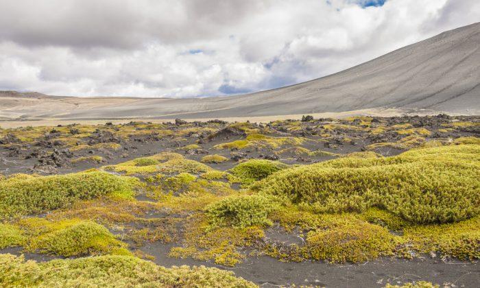 Volcanic landscape in Myvatn area - Iceland. (*Shutterstock)