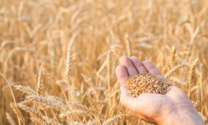 How Gluten can Affect Your Brain, Gut, and Skin