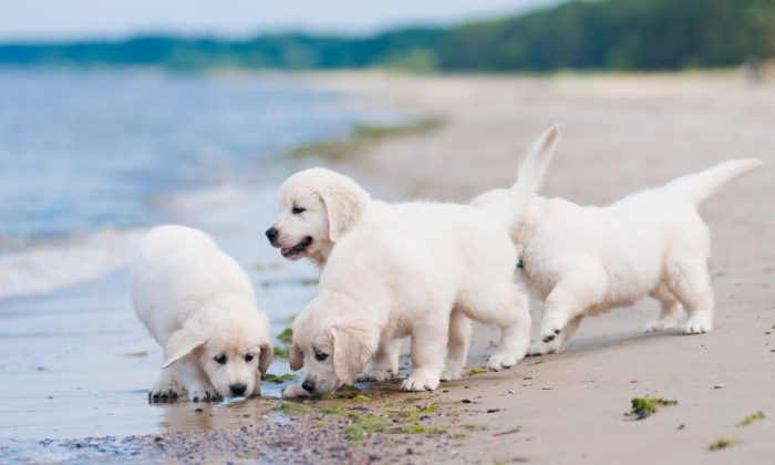 A stock photo of puppies. (Shutterstock)