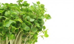 Broccoli-Sprout Beverage Helps Detoxify Environmental Pollutants