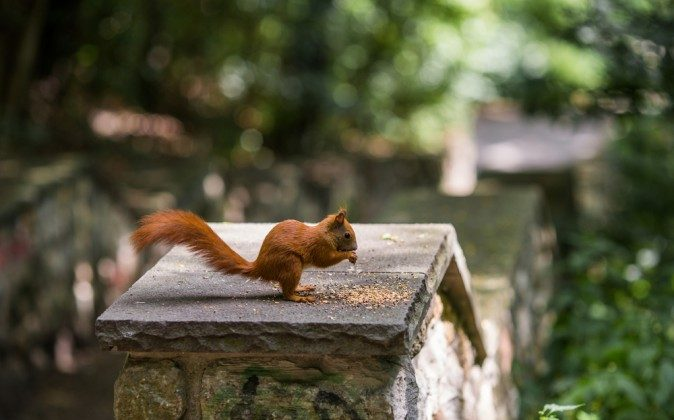 A squirrel sits on a stone in the Green Summer City Park, Berlin, Germany. (Shutterstock)