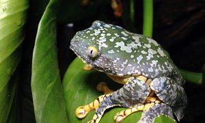 Rainforest Logging Hits Biodiversity Hard