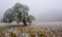 Help Wildlife Survive Winters in Our National Forests