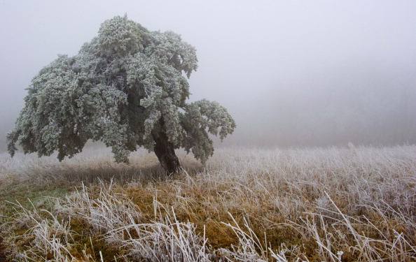 A winter scene created by frigid temperatures and moisture from the low lying clouds on December 7, 2013, in the Shenandoah National Park, Virginia. (Karen Bleier/AFP/Getty Images)